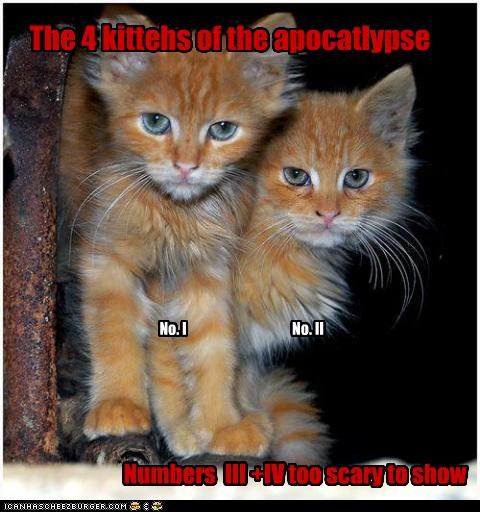 The 4 kittehs of the apocatlypse