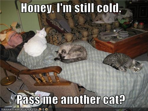 Honey, I'm still cold.  Pass me another cat?