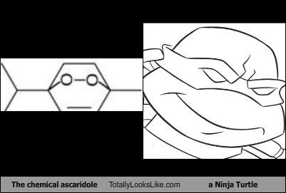 The chemical ascaridole Totally Looks Like a Ninja Turtle