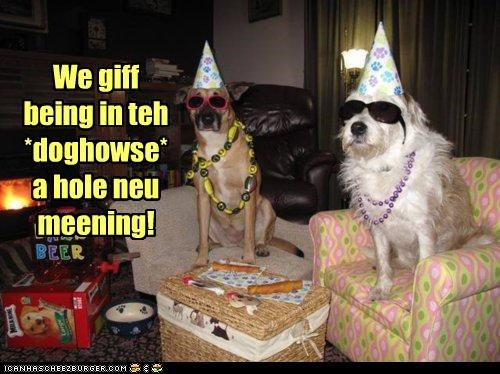 bad,bull mastiff,bullmastiff,doghouse,double meaning,dressed up,hats,meaning,new,Party,party hats,sheepdog,sunglasses