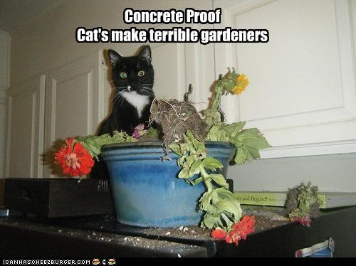 Concrete Proof Cat's make terrible gardeners