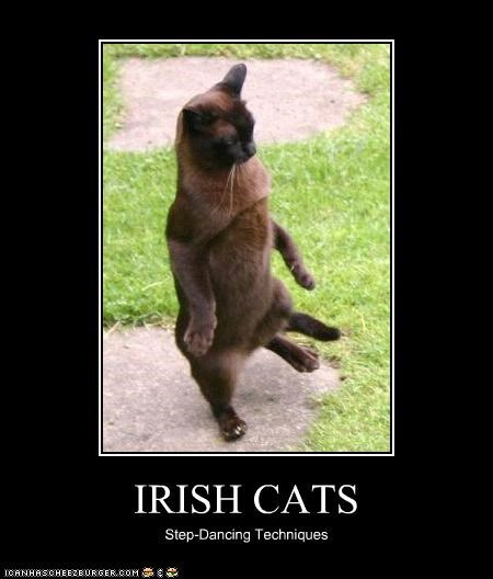 caption,captioned,cat,dancing,demonstration,irish,siamese,step dance,step dancing,technique