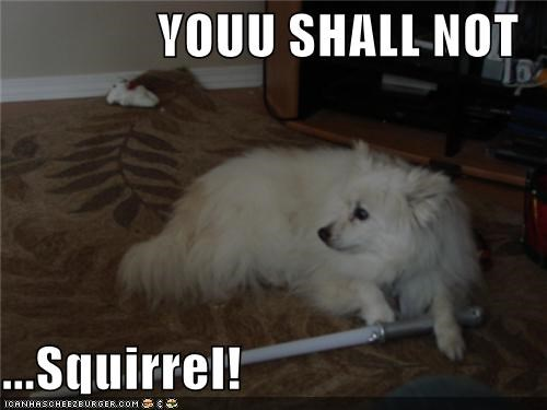 YOUU SHALL NOT  ...Squirrel!