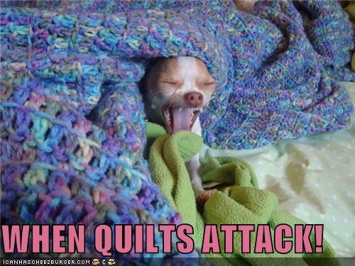 attack,chihuahua,crime,do not want,help,quilt,screaming,when,witness
