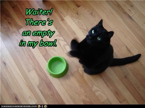 bowl,by the way,caption,captioned,cat,crying,empty,exclamation,food,pointing out,problem,waiter