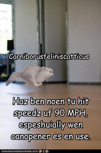 Carniborusfeliniscatticus