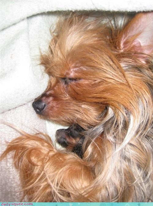 baby,dogs,mommy,newborn,pet,reader squee,yorkie