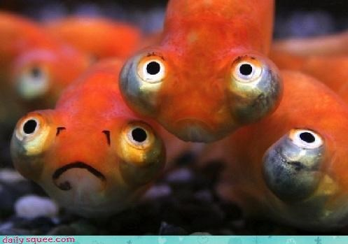Whatsit: Frowny fish