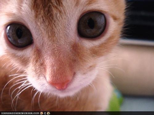 alien,big eyes,cyoot kitteh of teh day,kitten,orange