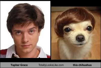Topher Grace Totally Looks Like this chihuahua
