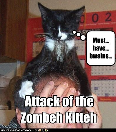 Attack of the Zombeh Kitteh