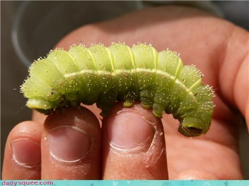 Caterpillar Friend