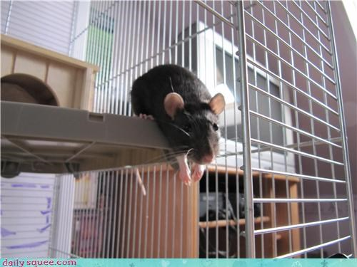 Reader Squees: Just Hangin' Out
