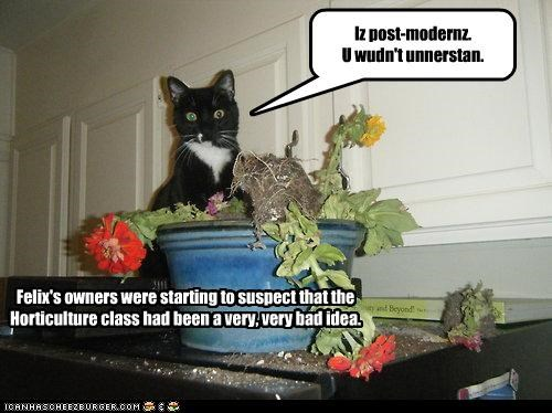 Felix's owners were starting to suspect that the Horticulture class had been a very bad idea.