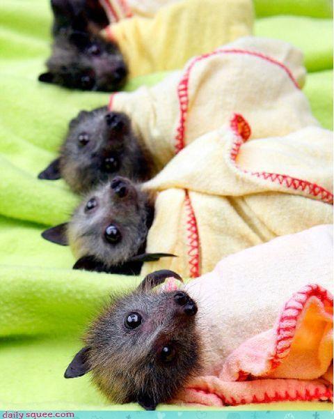 Bat Blankets! That utility belt has everything.