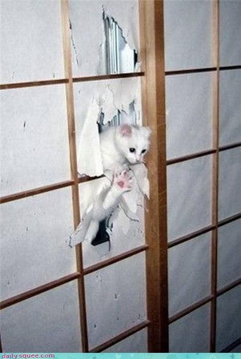 cat,Japan,kitten,paper,wall