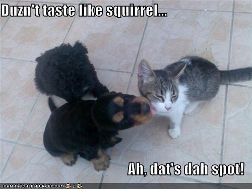 Duzn't taste like squirrel...  Ah, dat's dah spot!