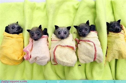 Bundles of bats