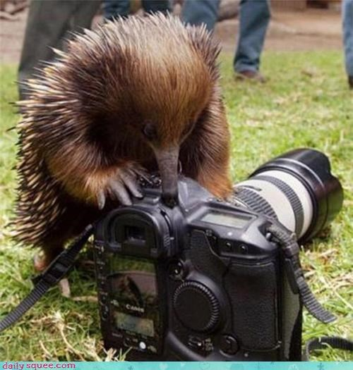 Don't worry ma'am, if there are ants in your camera I'll find'em