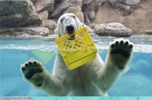 acting like animals,amnesia,bucket,confused,confusion,crate,identity crisis,lolrus,memento,Movie,polar bear