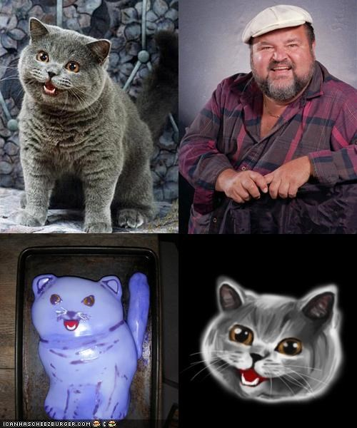 Happycat Look-Alike Contest!