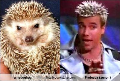 a hedgehog Totally Looks Like Protozoa (zenon)