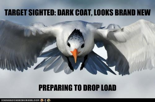 bird,bombing,brand new,caption,captioned,coat,evil,flying,karma,payload,preparing,sighted,Target
