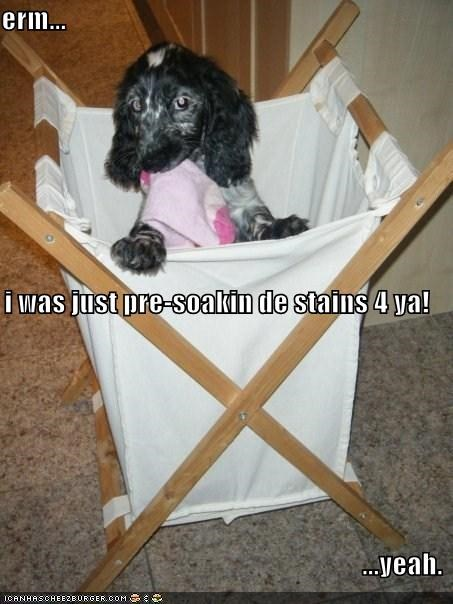 erm... i was just pre-soakin de stains 4 ya! ...yeah.