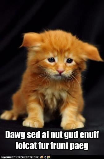 caption,captioned,cat,comment,condescending,dogs,front page,kitten,mean,moping,not good enough,Sad,said,upset