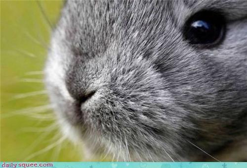 bunny,cute,nose,rabbit,squee spree,weird