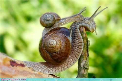 Daily Squee: Creepicute - Slimy Romance