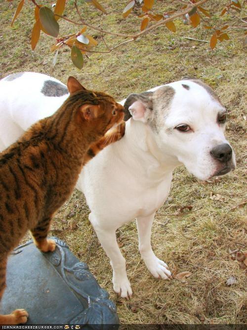 dogs,goggies,goggies r owr friends,Interspecies Love,secret,whisper
