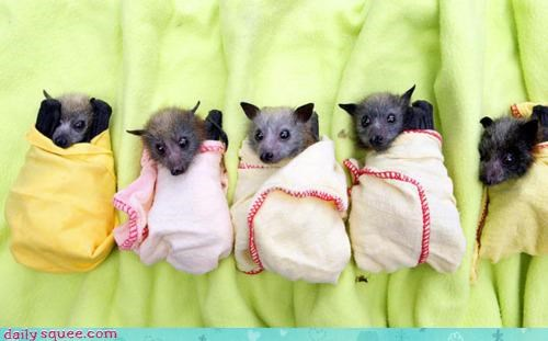 acting like animals,australia,baby,bad idea,bat,bats,blankets,cuddling,cute,flooding,rescued,squee,tiny