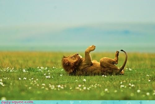 acting like animals,daydreaming,dreaming,field,laying down,lion,lyrics,parody,relaxing,rewrite,sky,song,Staring,the monkees