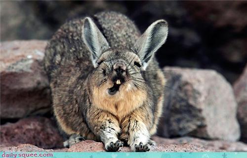 bunny,funny,happy bunday,mouth,stretch,teeth
