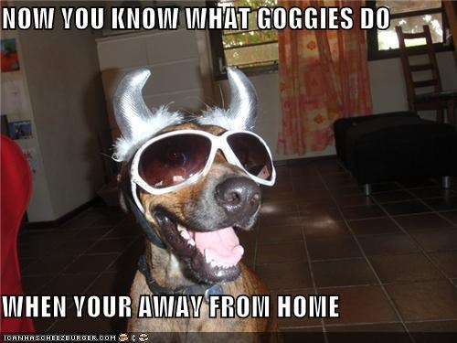 NOW YOU KNOW WHAT GOGGIES DO  WHEN YOUR AWAY FROM HOME