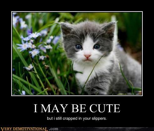 animals,Caturday,kitteh,kitten,nature,poop,slippers