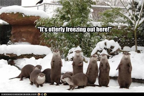 """It's otterly freezing out here!"""