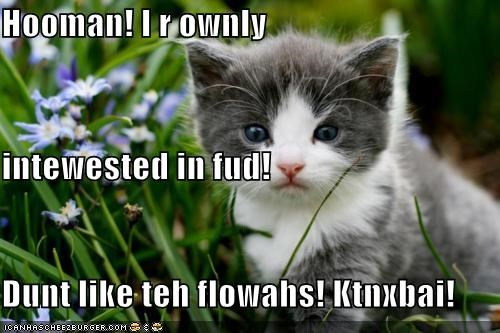 Hooman! I r ownly intewested in fud! Dunt like teh flowahs! Ktnxbai!