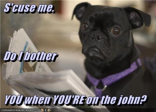 bothered,business,impolite,john,newspaper,pug,question,reading,rude,sarcasm,upset