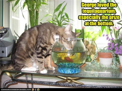 aquarium,bottom,caption,captioned,cat,combination,do want,drinking,fish bowl,licking,neologism,prize,tequila,water