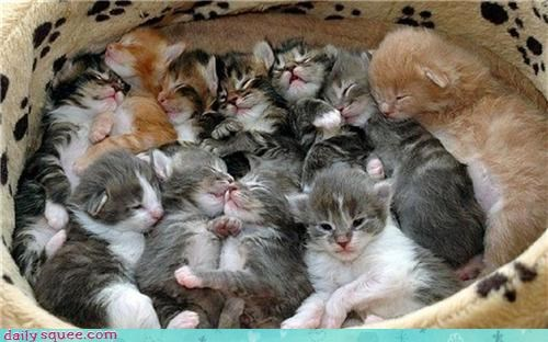 A Huge Litter of Squee