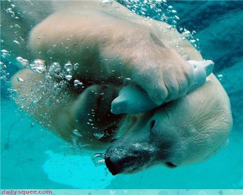 bear,phone,polar bear,swimming,underwater
