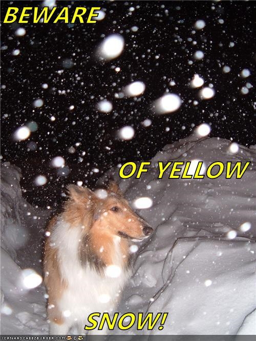 BEWARE OF YELLOW SNOW!