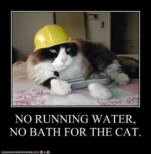 bath,breaking,caption,captioned,cat,deduction,fixing,hard hat,logic,plumbing,requirements,running,water