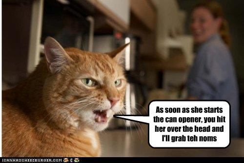 As soon as she starts the can opener, you hit her over the head and I'll grab teh noms
