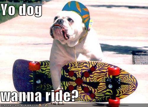 asking,awesome,bulldog,do want,hat,question,ride,skateboard,skateboarding,wanna,want,yo dawg