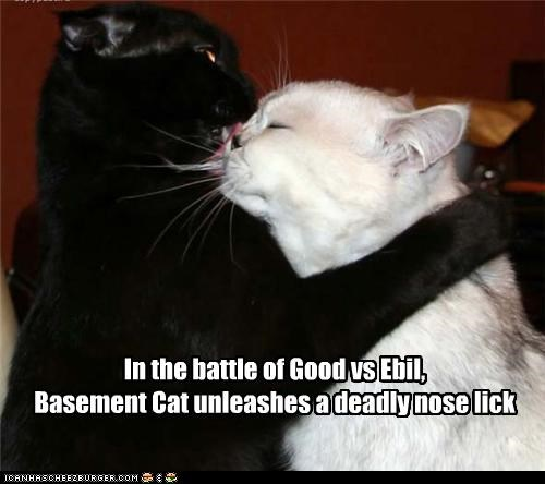 In the battle of Good vs Ebil,  Basement Cat unleashes a deadly nose lick