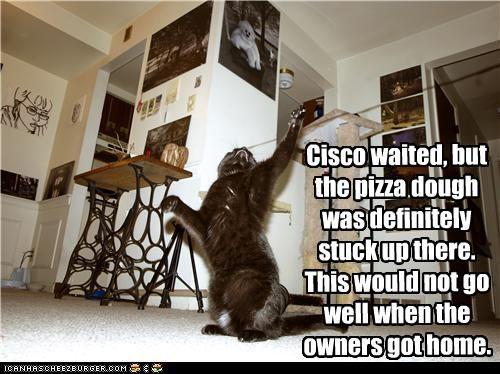accident,bad,caption,captioned,cat,ceiling,dough,fearful,pizza,situation,stuck,waiting