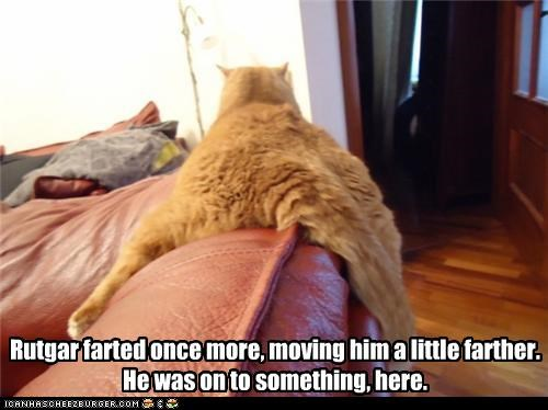 caption,captioned,cat,couch,fart,farting,fat,idea,lazy,more,moving,propulsion,scooting,tabby